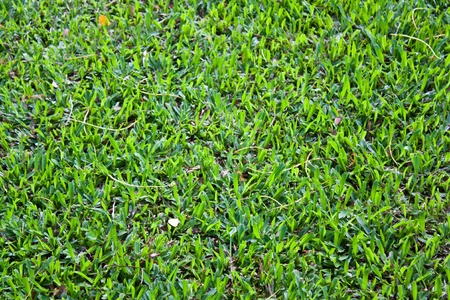 Lawn and clean look Stock Photo - 9245735