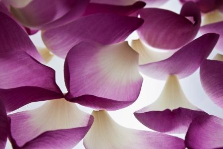 Petal lotus effect light photo