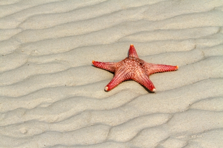 sea star starfish on beach, blue sea  in Pattaya Beach