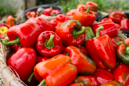 Disconnect the red bell peppers in the garden toxins photo