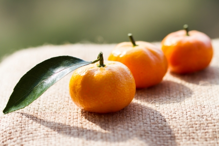 growers: Natural non-toxic citrus growers in Thailand