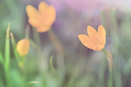 bright: Colorful flower in soft color soft focus and blur background in color tone pastel bright. Stock Photo