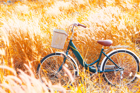Vintage Bicycle in Summer Meadow made with color Vintage Tone,Filtered effect Stock Photo
