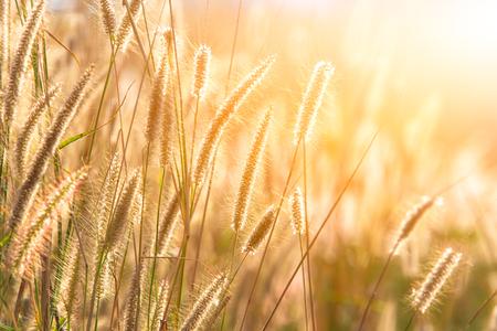 meadow in warm summer Imagens