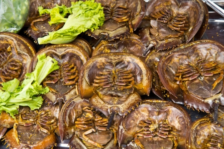 Horseshoe crab Stock Photo - 13636442