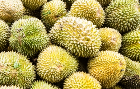Durian fruit Stock Photo - 14462496