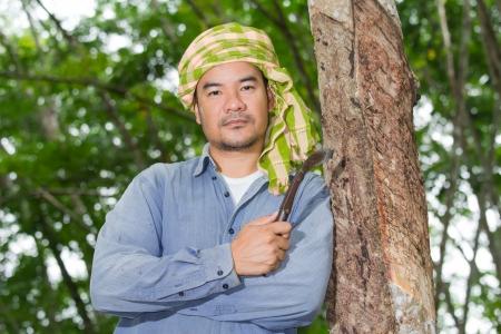Asian man cutting rubber tree