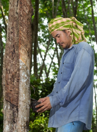 Asian man cutting rubber tree Stock Photo - 19121032