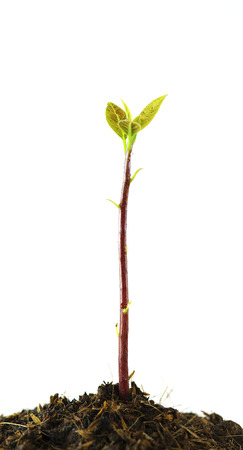 young plant tree growing seedling in soil isolated on white background photo
