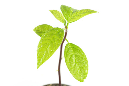 young plant tree  isolated on white background