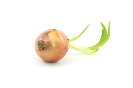 growth onion on a white background