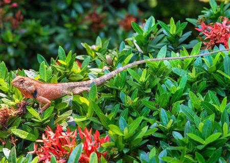 chameleon on tree plant green leaf photo