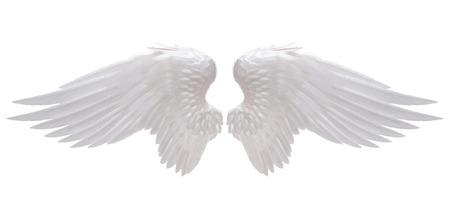 Witte engel vleugel geïsoleerde Stockfoto - 33688289