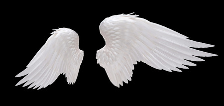 the angel of death: white angel wing isolated