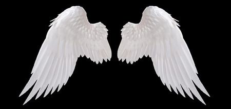 two: white angel wing isolated