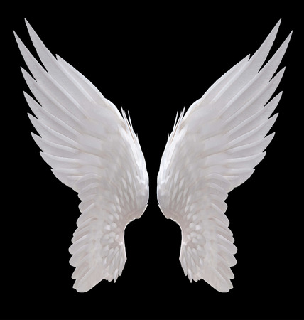 Witte engel vleugel geïsoleerde Stockfoto - 33688502