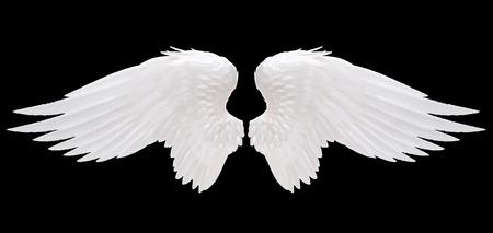 cisnes: ángel ala blanco aislado