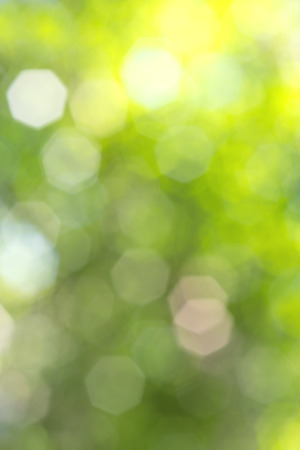 bokeh of  nature background photo