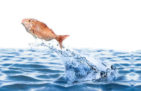 fish spa: fish jumping over slash blue water