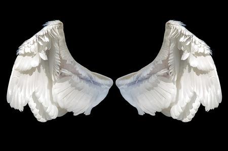 pluma blanca: ángel ala blanco aislado