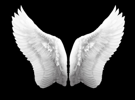 angel and devil: white angel wing isolated