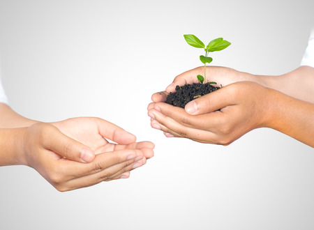 Hands of woman holding and taking a young plant isolated on white. Ecology concept photo