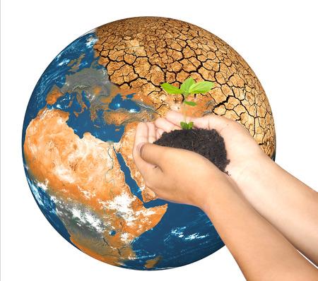 plantando arbol: Manos de la mujer la celebraci�n de la plantaci�n de �rboles en el globo calentamiento, guardar el concepto de la Tierra Foto de archivo