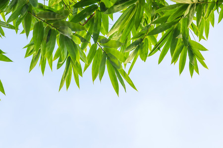 Top view of bamboo leaf with sky  photo