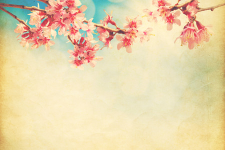 chinese: spring sakura pink flower  on sun sky vintage color toned abstract nature   Stock Photo
