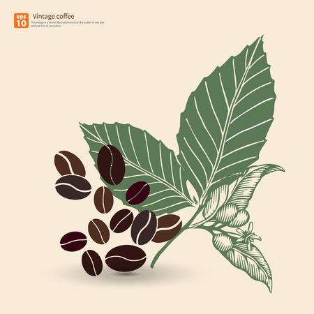 Neue Kaffeebohne mit Blatt vintage Vektor-Design- Standard-Bild - 33820650