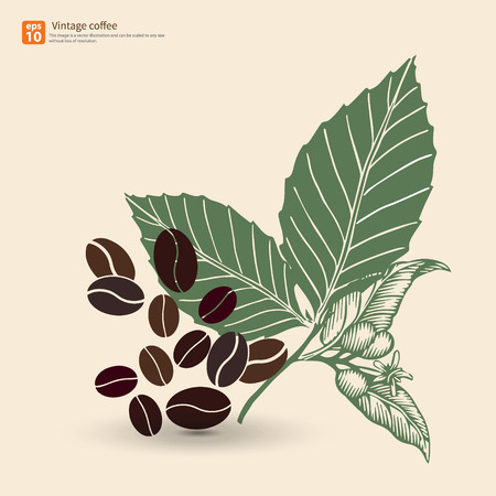 macro leaf: New coffee bean with leaf vintage vector design