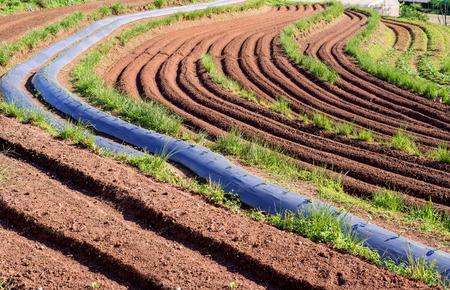 plots: landscape of soil terraces