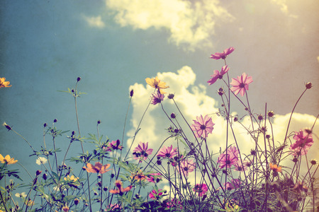 flower: Vintage photo of nature background with wild flowers and plants