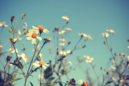 Foto de la vendimia de la naturaleza de fondo con flores y plantas silvestres Foto de archivo