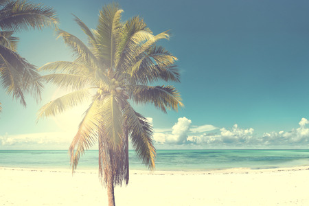 Vintage coconut palm tree on beach blue sky with sunlight of morning in summer