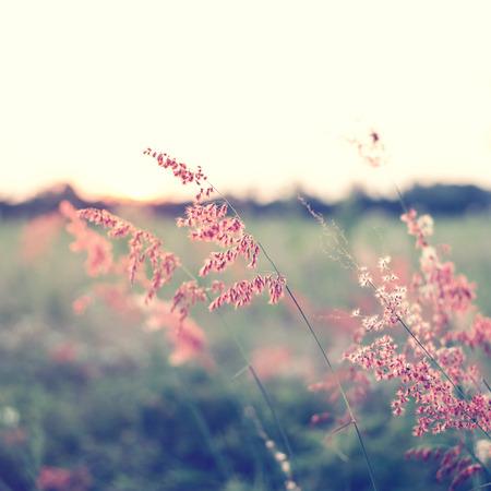 Vintage wild flower in sunset Stok Fotoğraf