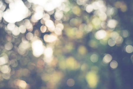 vintage nature background of  sunlight bokeh in morning