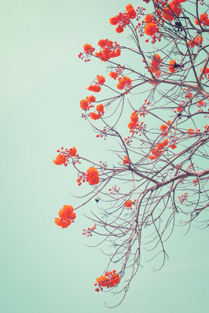 nature of vintage tree red flower in summer with blue sky, Vertical photo