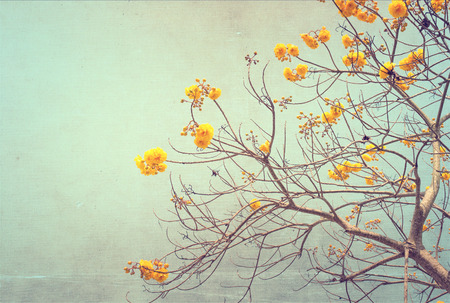nature of vintage tree flower in summer ,canvas paper art texture photo