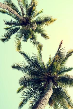 Vintage nature background  Stockfoto