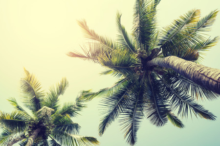 tropical paradise: Vintage nature background of coconut palm tree on tropical beach blue sky  Stock Photo