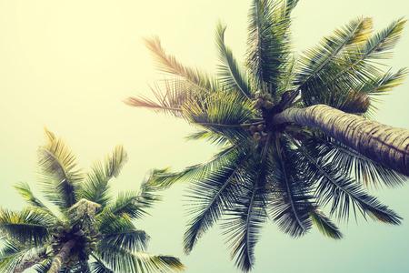 tropisch: Weinlese-Natur-Hintergrund der Kokosnusspalme auf tropischen Strand blauen Himmel