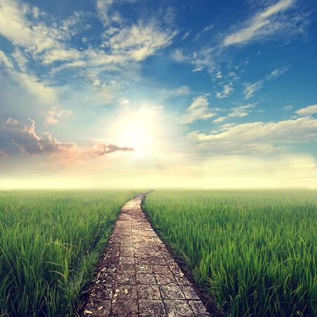 tappning natur bakgrund, gräsfält med sky sun