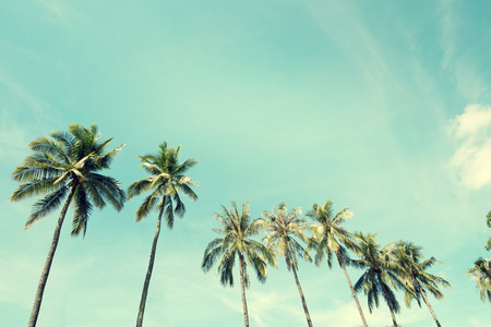 Vintage nature photo of coconut palm trees in seaside