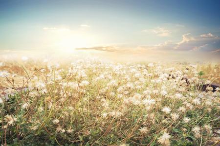 Landscape of flower with sun sky, vintage color effect Standard-Bild