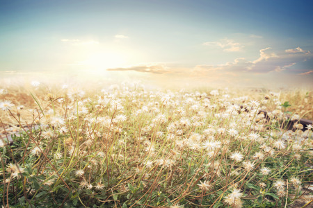 Landscape of flower with sun sky, vintage color effect Archivio Fotografico