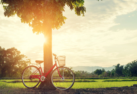 under a tree: Red bicycle parked under a tree on a sunny morning