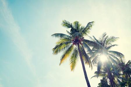 Vintage natuur achtergrond van kokos palmboom op tropisch strand blauwe hemel met zonlicht van de ochtend in de zomer, retro effect filter