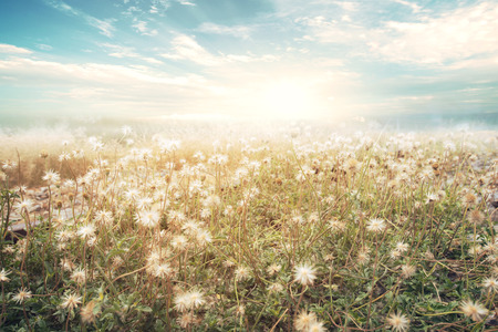 spring green: Landscape of flower with sun sky, vintage color effect Stock Photo