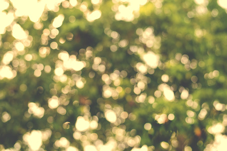 nature of sunlight: vintage nature background of sunlight bokeh in morning